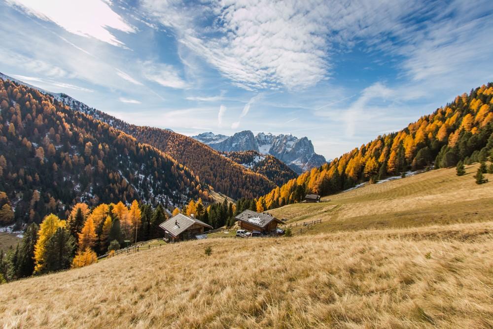 Foliage in Val di Fassa