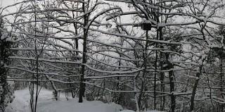 Magie d'inverno